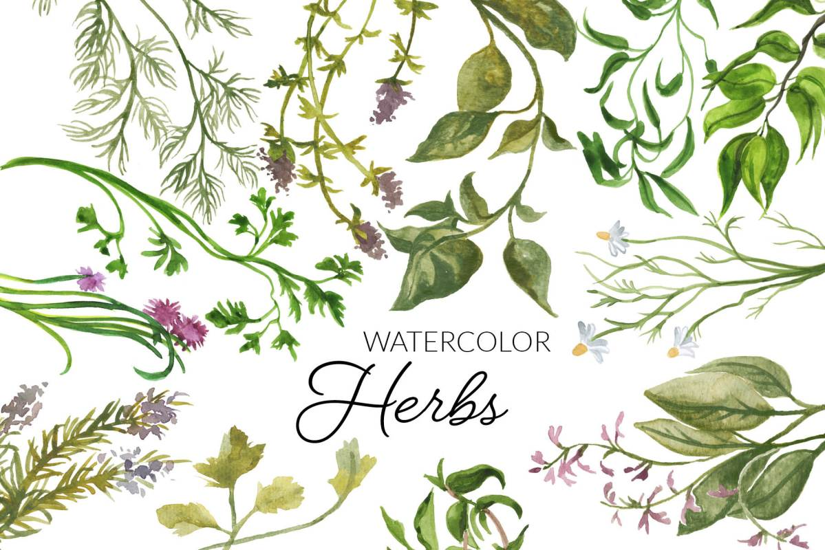 Watercolor Herbs Clipart, Digital Herb Botanical clipart
