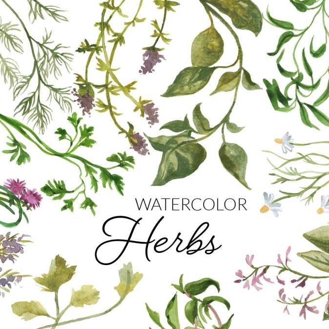 Watercolor Herbs Clipart, Digital Herb Botanical clipart