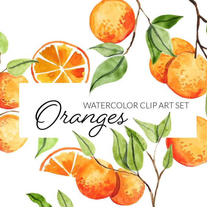 Watercolor Oranges and branches clipart png transparent background