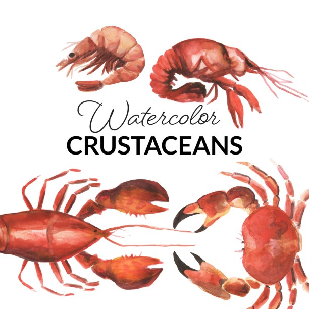 Watercolor Crustaceans Clipart, Crab, Shrimp, Lobster, crawfish