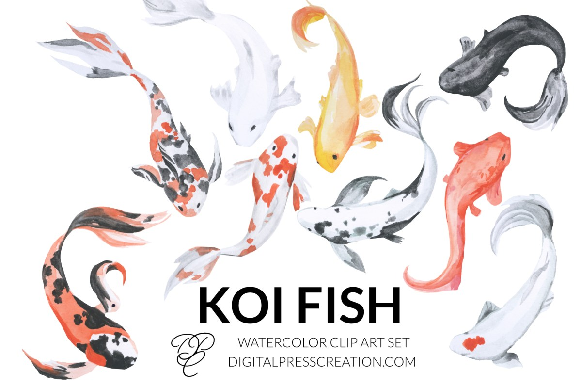 Watercolor japanese koi fish clipart digital illustration artwork