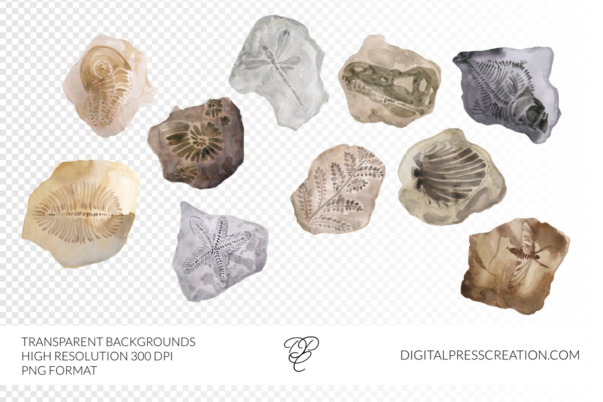 Watercolor fossils clipart set dinosaur clipart