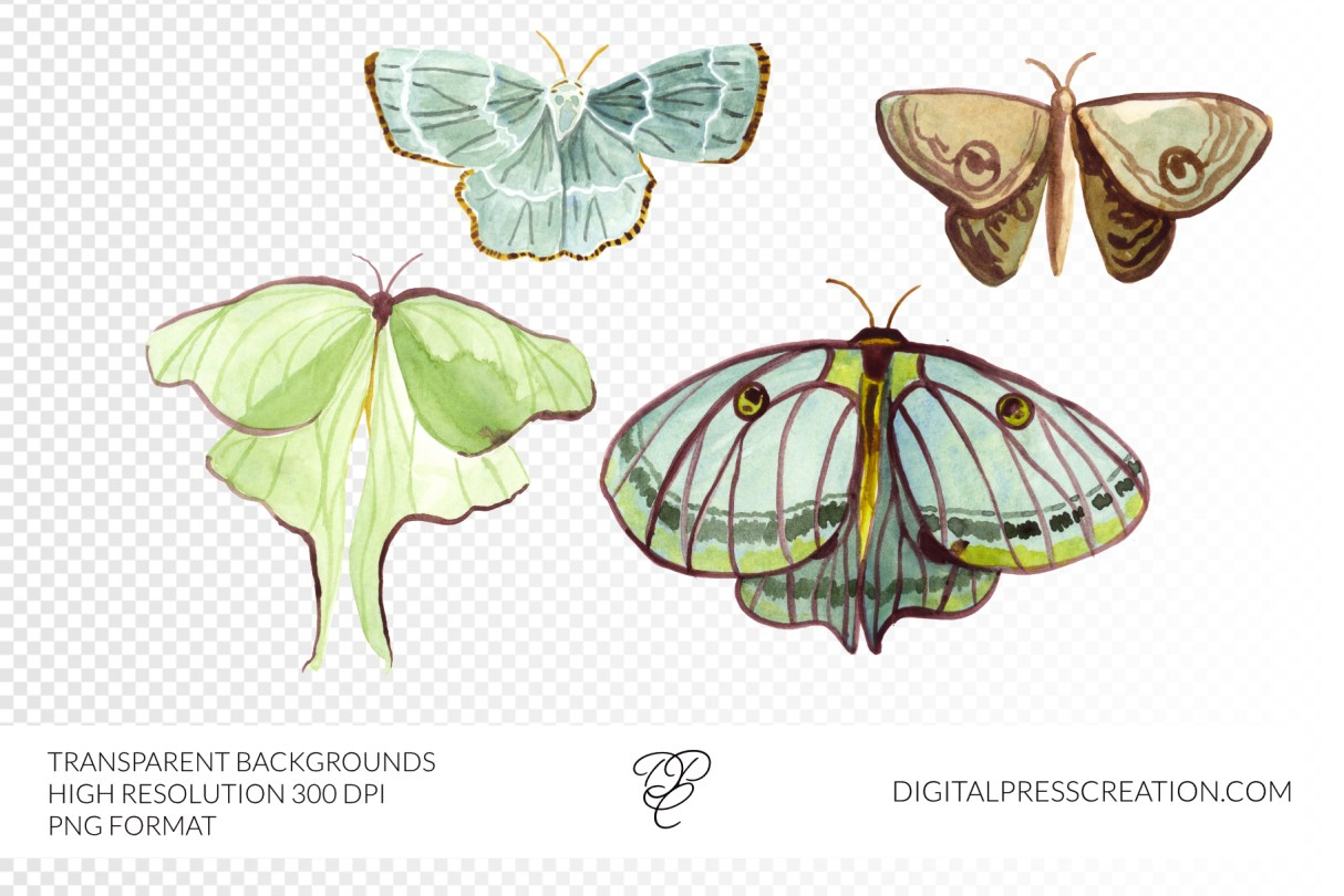 watercolor moth butterfly clipart PNG transparent