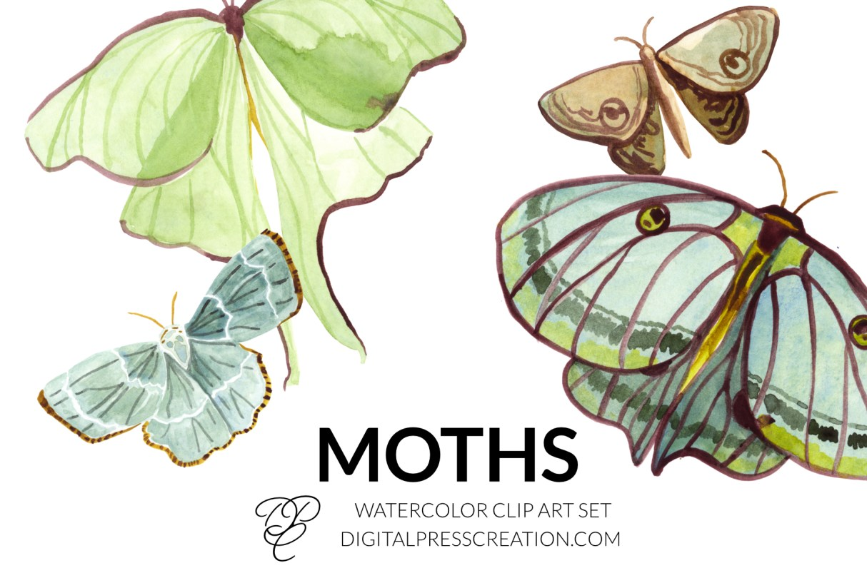 Watercolor moths flying large