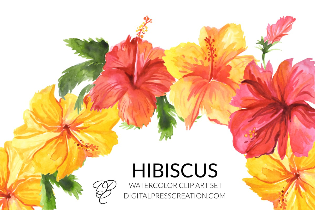 Watercolor Hibiscus clipart, digital floral elements hibiscus flower transparent PNG large tropical bahamas hawaii clipart