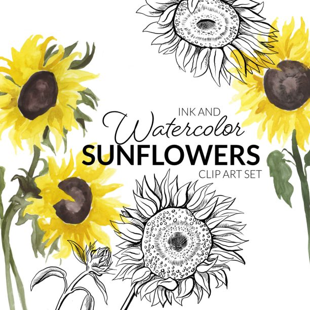 Ink and watercolor sunflowers clipart, yellow sunflower illustration, drawing lineart ink sun flower summer flower transparent backgrounds