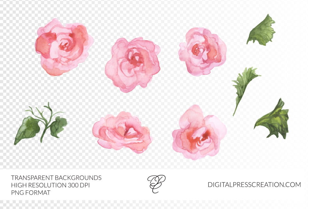 Watercolor begonia clipart pink florals transparent background png pink romantic floral blooms