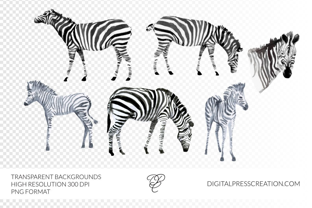 Watercolor african zebra clipart illustration baby animals, baby zebra