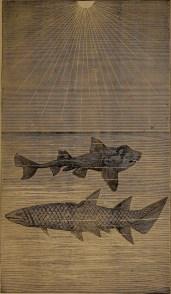 """Port Jackson shark – Cheiracanthus"" illustration from ""God in nature and revelation"" (1875)"