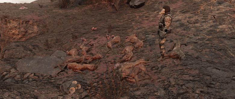 A pile of dead dogs in Fallout 76