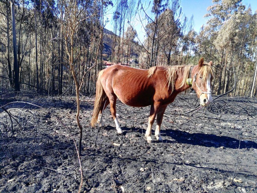 Rubia se encuentra bien tras el incendio