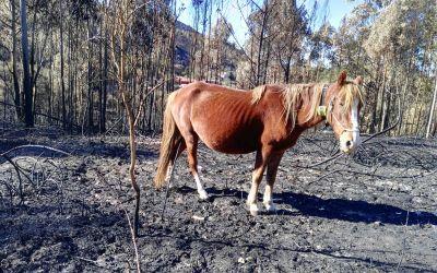 Digitanimal en los incendios de España y Portugal