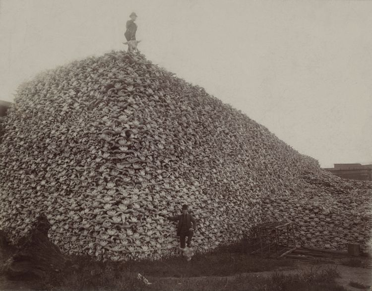 a black and white photograph of a massive pile of bison skulls
