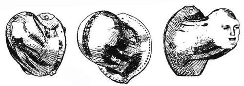 Black and white etchings of three different types of codpieces.