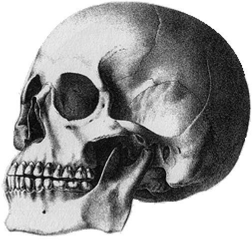 A black and white etching of a skull from Crania Americana