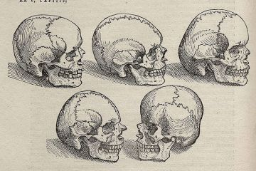 ink sketches of several skulls of varying shapes/sizes