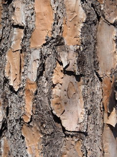 A Little Bit of Tree Bark 3