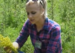 Samohrana majka iz BiH izdržava blizanke berući ljekovito bilje