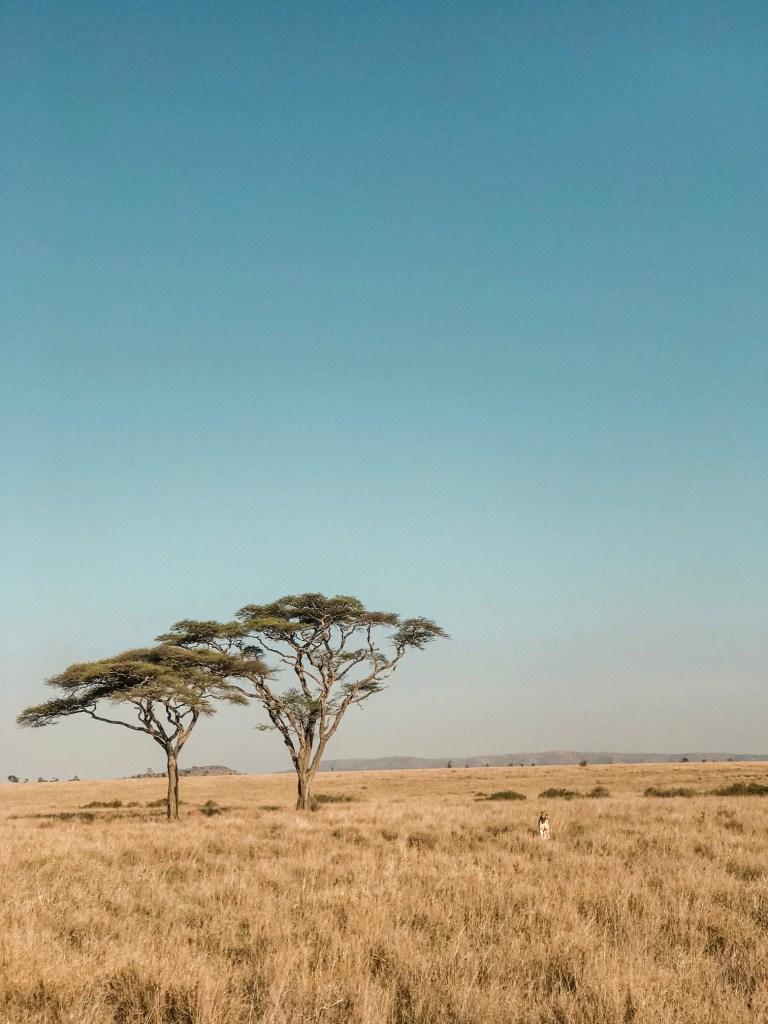 Savannah in Serengeti National Park
