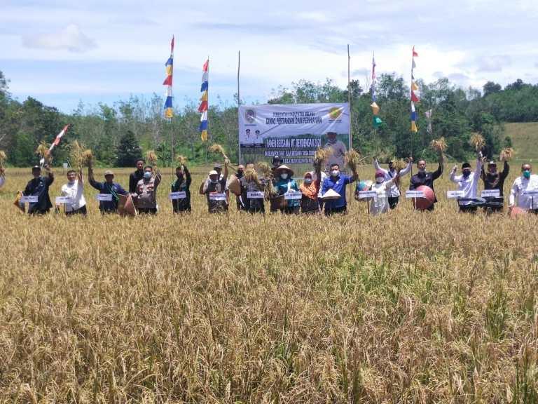 Penen Bersama Padi Sawah Kelompok Tani Bulai Bersama Dihadiri Bupati