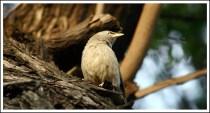 A Bird in wild