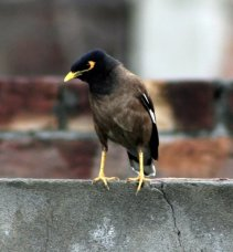 A bird looking down from a cemented wall in a city settings
