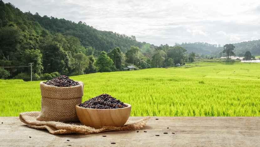 Best Brown Rice Brand