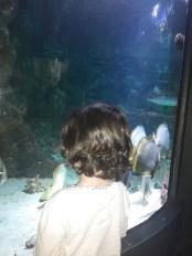 il pesce Pippo!