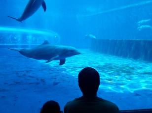 la vasca dei delfini all'acquario di gnova