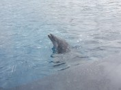 delfini durante l'addestramento