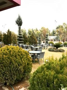A garden behind the coffee shop...