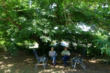 Under the Chestnut Tree - Lesley and Pete (Vic)