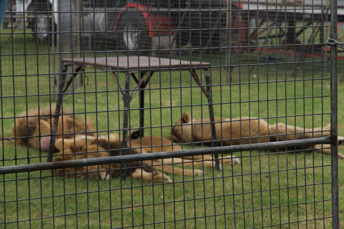 Singleton Showgrounds - Visiting Circus (NSW)