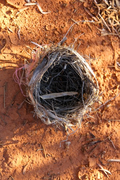 Nest (The Red Lizard Campground, Charleville)