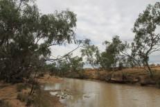 Winton - Bough Shed Waterhole (Qld)