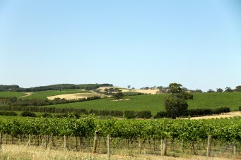 Barossa Valley - Seppeltsfield Winery (SA)