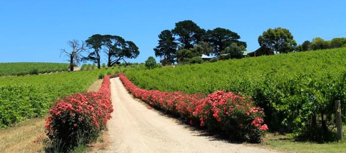 Fleurieu Peninsula - Dog Ridge Winery (SA)