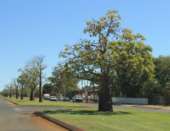 Derby - Avenue Of Boab Trees (WA)