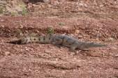 Lake Argyle - Sunset Cruise - Freshwater Crocodile (WA)