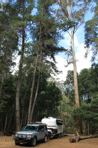 Big Brook Arboretum Campground (WA)