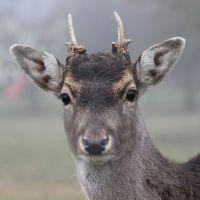 Dos recetas con carne de caza: corzo y ciervo