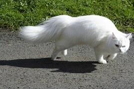cat-83326__180