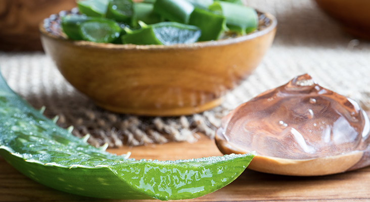 aloe vera in a wooden bowl