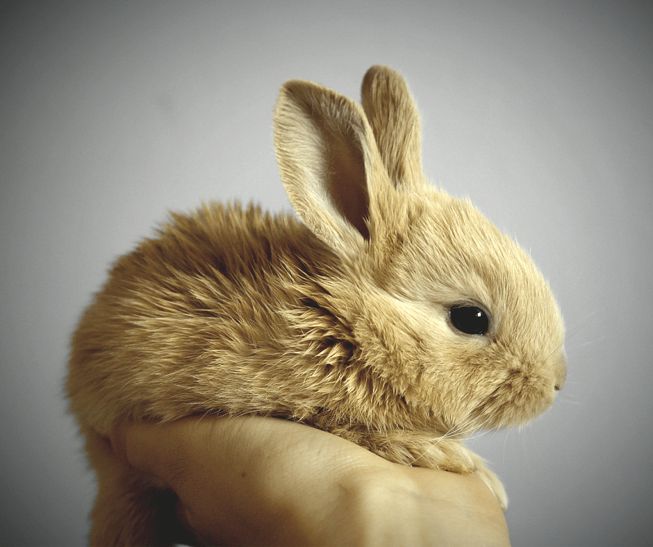 cruelty free introduction