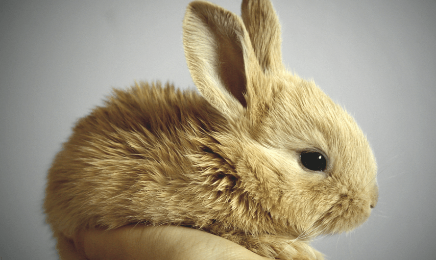 Are cosmetics tested on animals? {Cruelty-free 101}