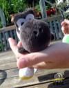Mini_Yoshis_-_cute
