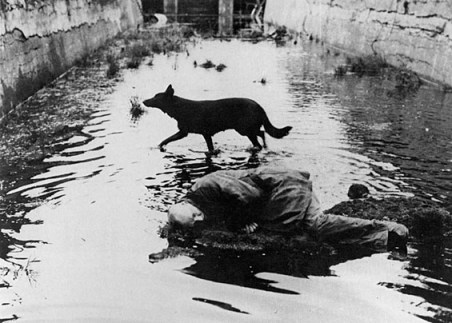 tarkovsky-stalker-mystical-dog