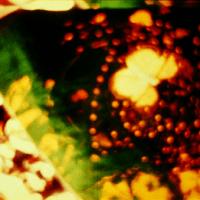 11 Frames: Third Eye Butterfly (1968) by Storm de Hirsch