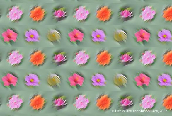FlowerIllusion