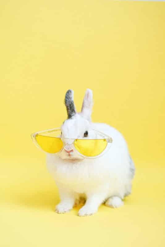foto keren untuk profil whatsapp instagram telegram tiktok facebook line hewan lucu kelinci putih pakai kacamata kuning di latar belakang kuning polos